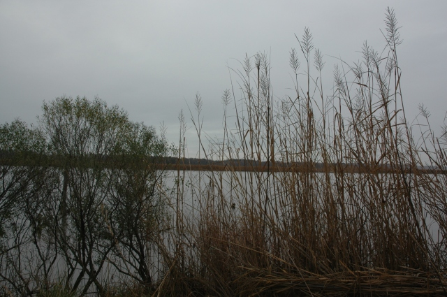 Patuxent River, Magruder's Warehouse site. Photo: Margaret Yocom, 2013.